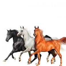 Three Horses PODCAST