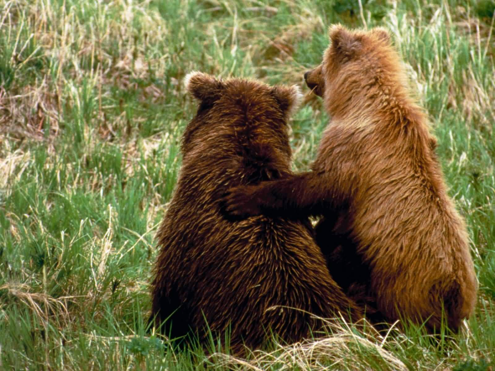 bears friends