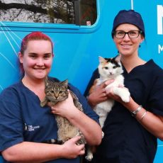 On the road to better cat welfare
