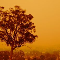 Our growing fire season and climate change – we talk to experts