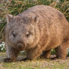 Sam Hibbins, Victorian Greens – Wombat Killings & Homelessness