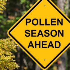 Prof. Ed Newbigin – Hayfever Season & Melbourne Pollen Forecast Website
