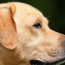 Dogs On Chapel Street – TASTY Raid 2.0?
