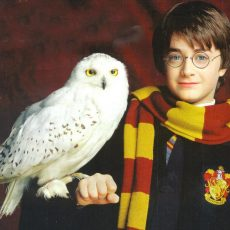 Harry Potter turns 20. What impact did the books have on queer fans?