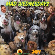 Don't miss the Doggy Dash & Pet Market with SCAR